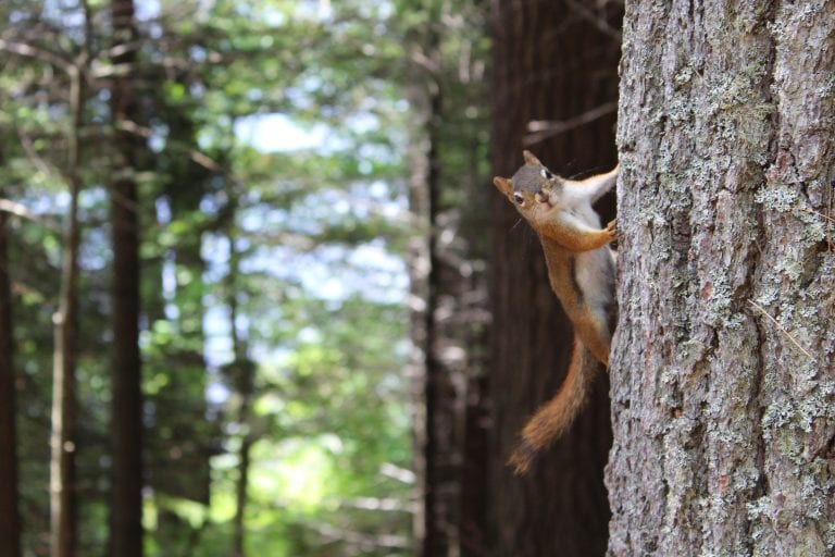 brown-squirrel-on-gray-tree-trunk-1571117